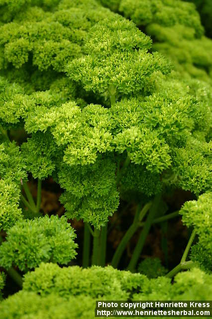 Parsley - full of minerals and vitamins A, B, C and D.